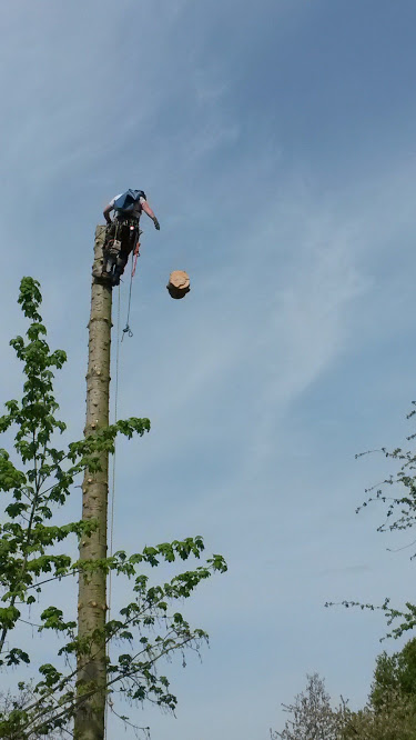 Tree Removal in Proximity to Cabin 3