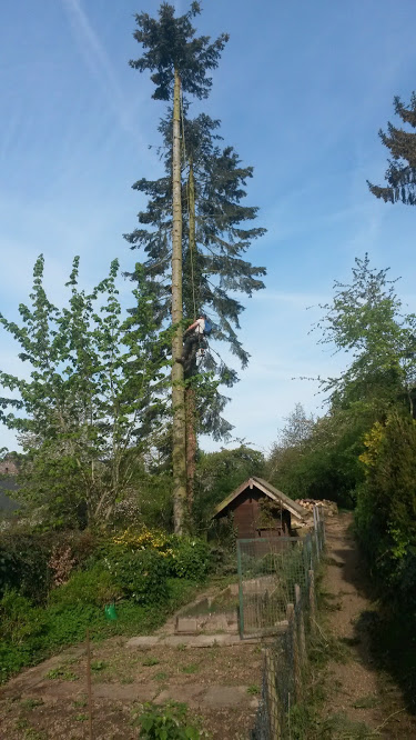 Tree Removal in Proximity to Cabin
