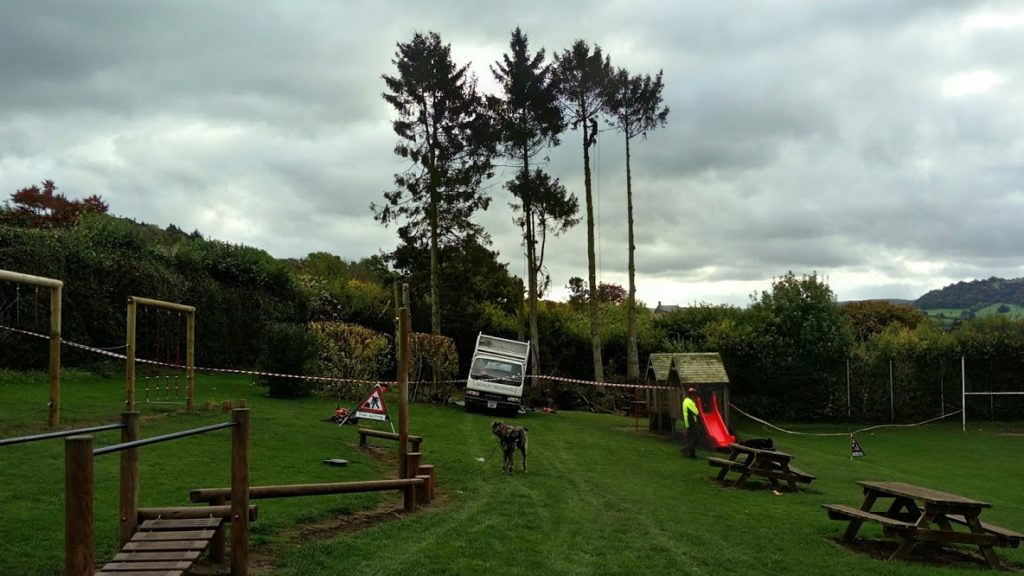 Tree Removal over Play Area