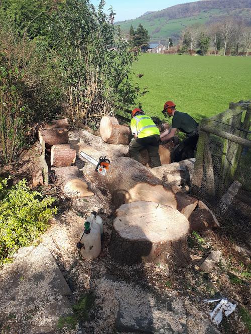 Cutting Logs 2