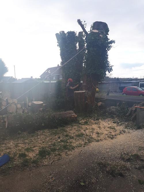 Pulling a Tree