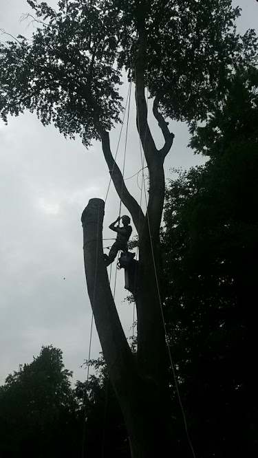 Removing a Tree